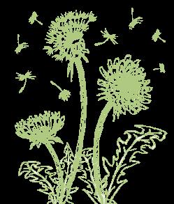 Family Central Dandelions
